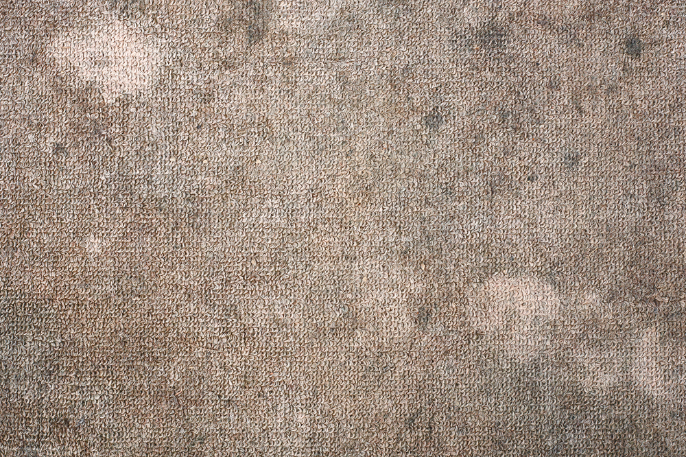 mold growing on carpet after a recent flood