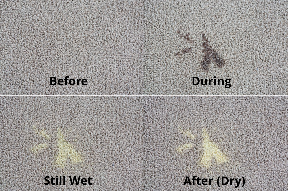 How To Use Bleach On Carpet Magic Carpet Inc